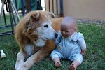 Does touching dogs nullify wudoo?
